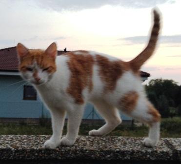 Tesné mačička príbeh